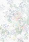 花卉0261,花卉,底纹,