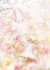 花卉0262,花卉,底纹,
