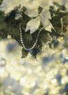花卉0266,花卉,底纹,