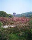 上海风景0096,上海风景,风景,