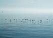 海洋风光0015,海洋风光,风景,