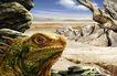 大自然景观0075,大自然景观,风景,变色龙 变色龙